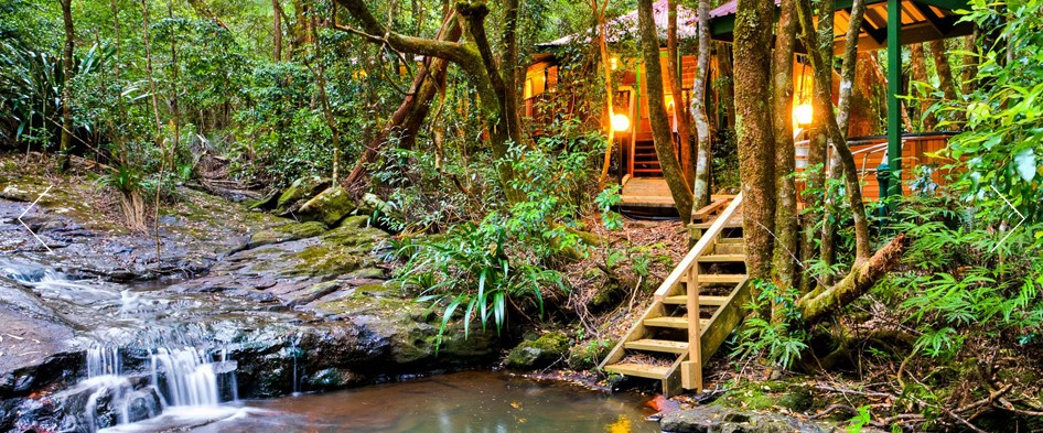 The Mouses House - Rainforest Retreat - Accommodation Bookings