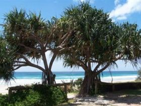 Pacific Surf Absolute Beachfront Apartments - Accommodation Bookings