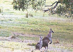 Kangaroo Ridge Retreat - Accommodation Bookings