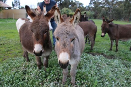 Donkey Tales Farm Cottages - Accommodation Bookings