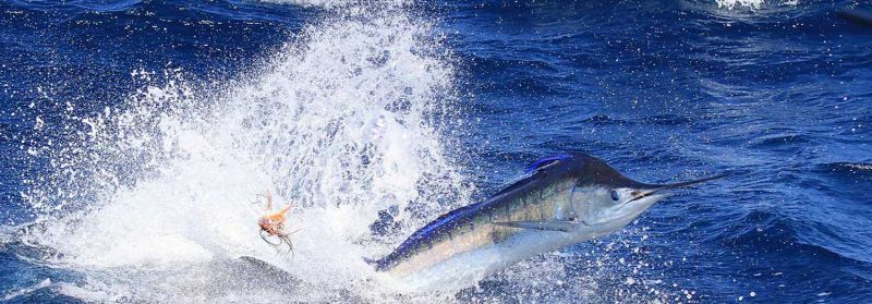 True Blue Fishing Charters - Accommodation Bookings