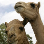 Marapana Wildlife Park - Accommodation Bookings