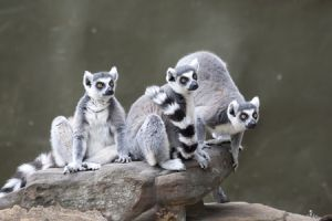 Adelaide Zoo - Accommodation Bookings