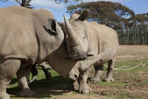 Monarto Zoo - Accommodation Bookings