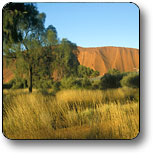 Uluru - Kata Tjuta National Park - Accommodation Bookings