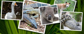 Rockhampton Zoo - Accommodation Bookings