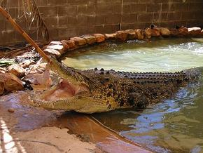 Wyndham Zoological Gardens and Crocodile Park - Accommodation Bookings