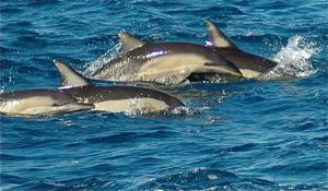 Dolphin Swim Australia - Accommodation Bookings