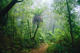 Lamington National Park and OReillys - Accommodation Bookings