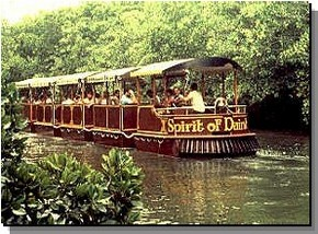 Daintree Rainforest River Trains - Accommodation Bookings