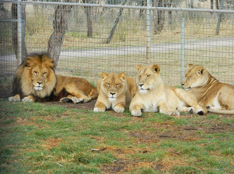 Darling Downs Zoo - Accommodation Bookings