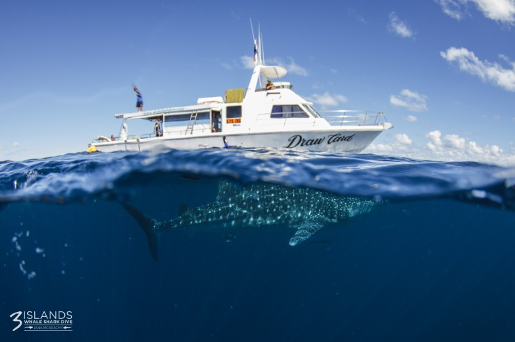 Three Islands Whale Shark Dive - Accommodation Bookings