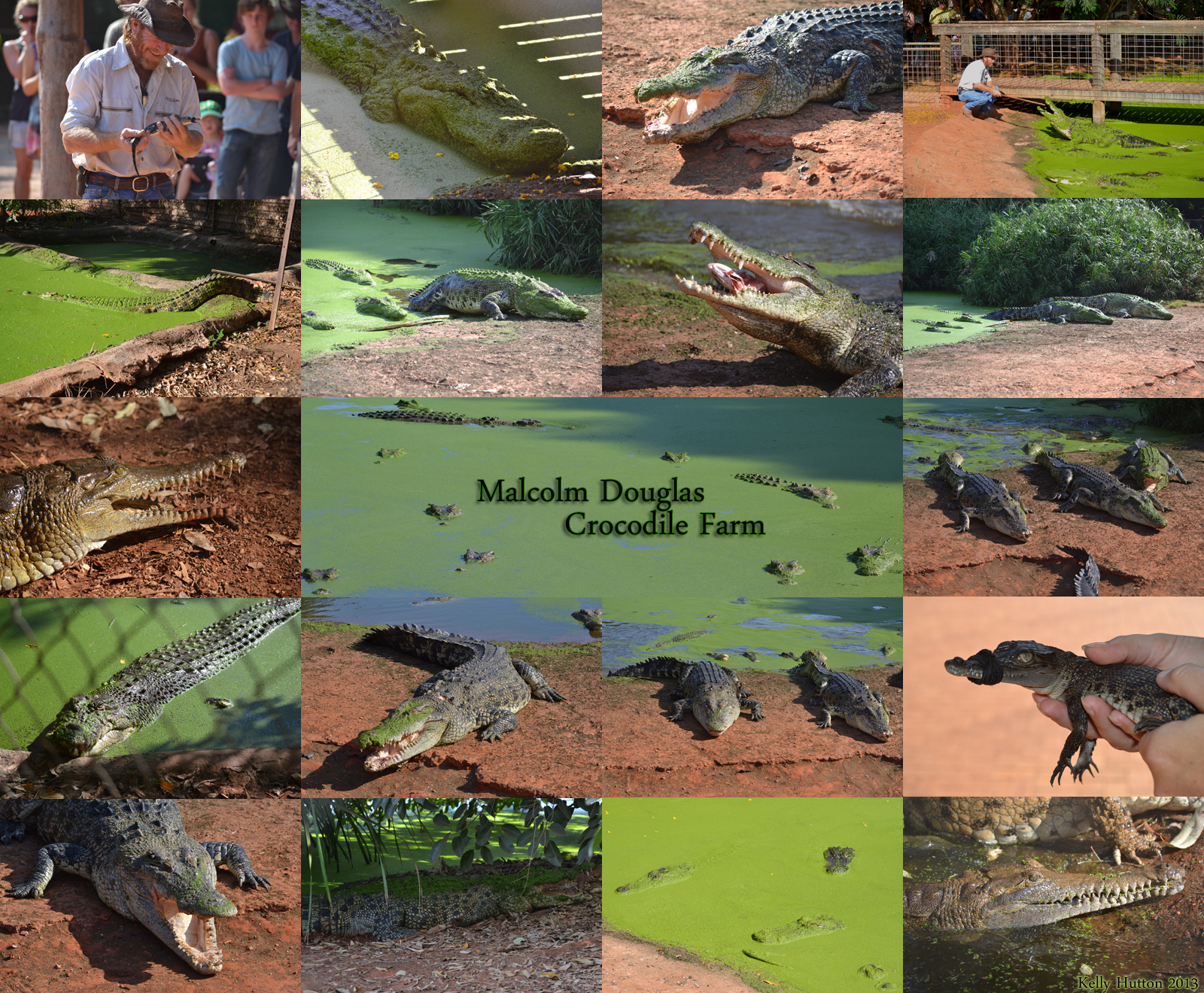 The Malcolm Douglas Crocodile Park - Accommodation Bookings