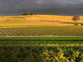 Kellermeister Wines - Accommodation Bookings