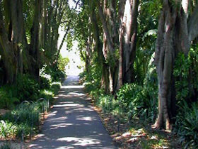 Adelaide Botanic Garden - Accommodation Bookings