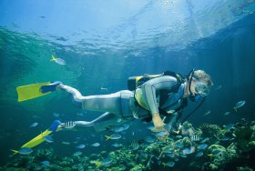 Kirra Reef Dive Site - Accommodation Bookings