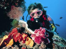 Cook Island Dive Site - Accommodation Bookings
