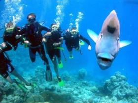 Jew Shoal Dive Site - Accommodation Bookings