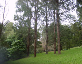 Mount Dandenong Arboretum - Accommodation Bookings