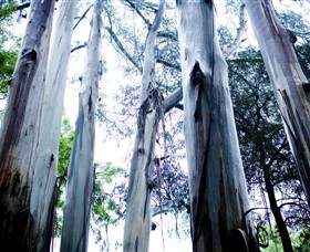 Dandenong Ranges National Park - Accommodation Bookings