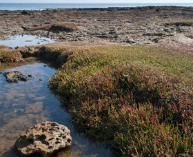 Ricketts Point Marine Sanctuary - Accommodation Bookings