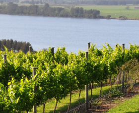 Two Figs Winery - Accommodation Bookings