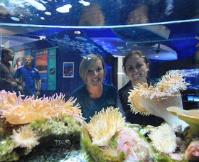 Solitary Islands Aquarium - Accommodation Bookings