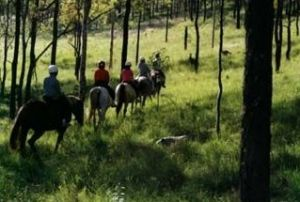 Hunter Valley Horse Riding and Adventures - Accommodation Bookings