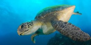 Byron Bay Dive Centre - Accommodation Bookings