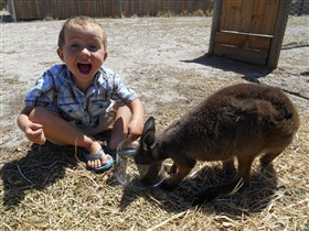 Animal Farm Goolwa - Accommodation Bookings