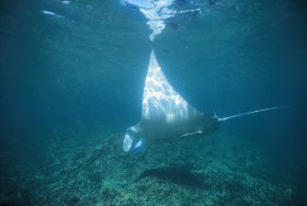 Manta Ray Bay Dive Site - Accommodation Bookings