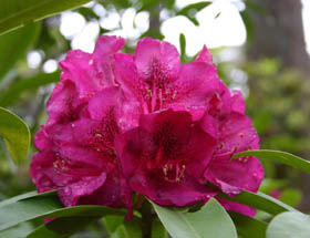 Campbell Rhododendron Gardens - Accommodation Bookings