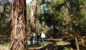 Tallaganda National Park - Accommodation Bookings