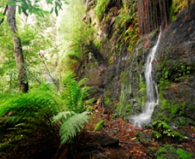 Fairy Bower Falls - Accommodation Bookings