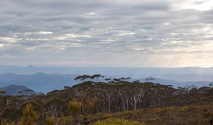 Mount Budawang trail - Accommodation Bookings
