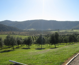 Hastings Valley Olives - Accommodation Bookings