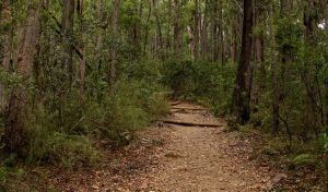 Pigeon House Mountain Didthul walking track - Accommodation Bookings