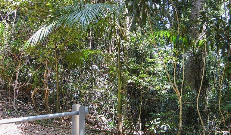 Goorgana walking track - Accommodation Bookings