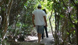 Three Sisters walking track - Accommodation Bookings