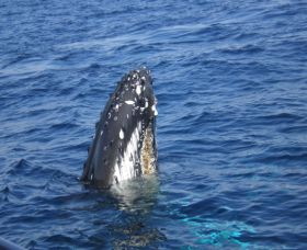 Jervis Bay Whales - Accommodation Bookings