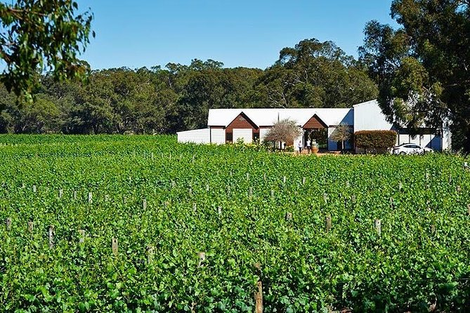 Upper Reach Winery Swan Valley Winery and Vineyard Tour - Accommodation Bookings