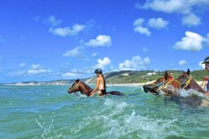 Horse Swimming Ride from Rainbow Beach - Accommodation Bookings