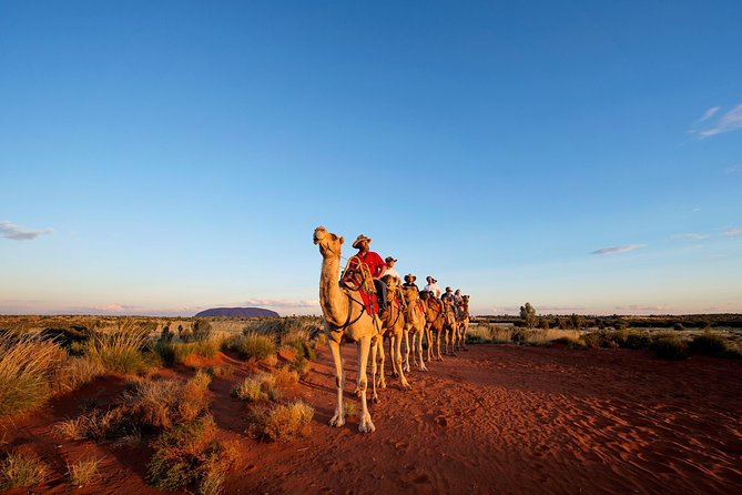 Uluru Camel Express Sunrise or Sunset Tours - Accommodation Bookings
