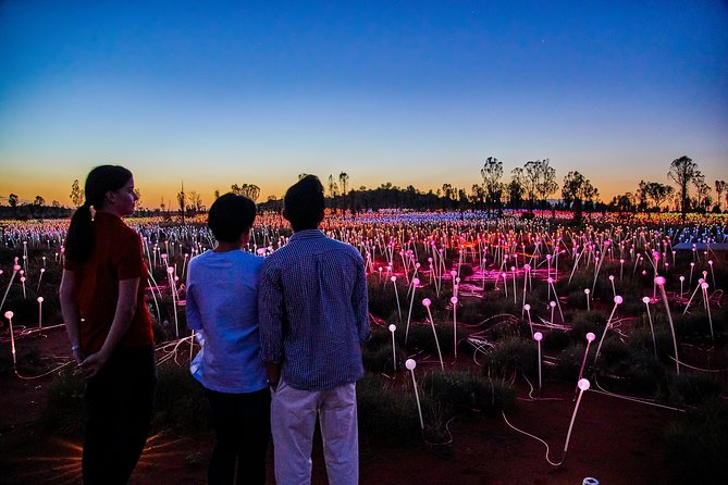Uluru Field of Light Sunrise Tour - Accommodation Bookings