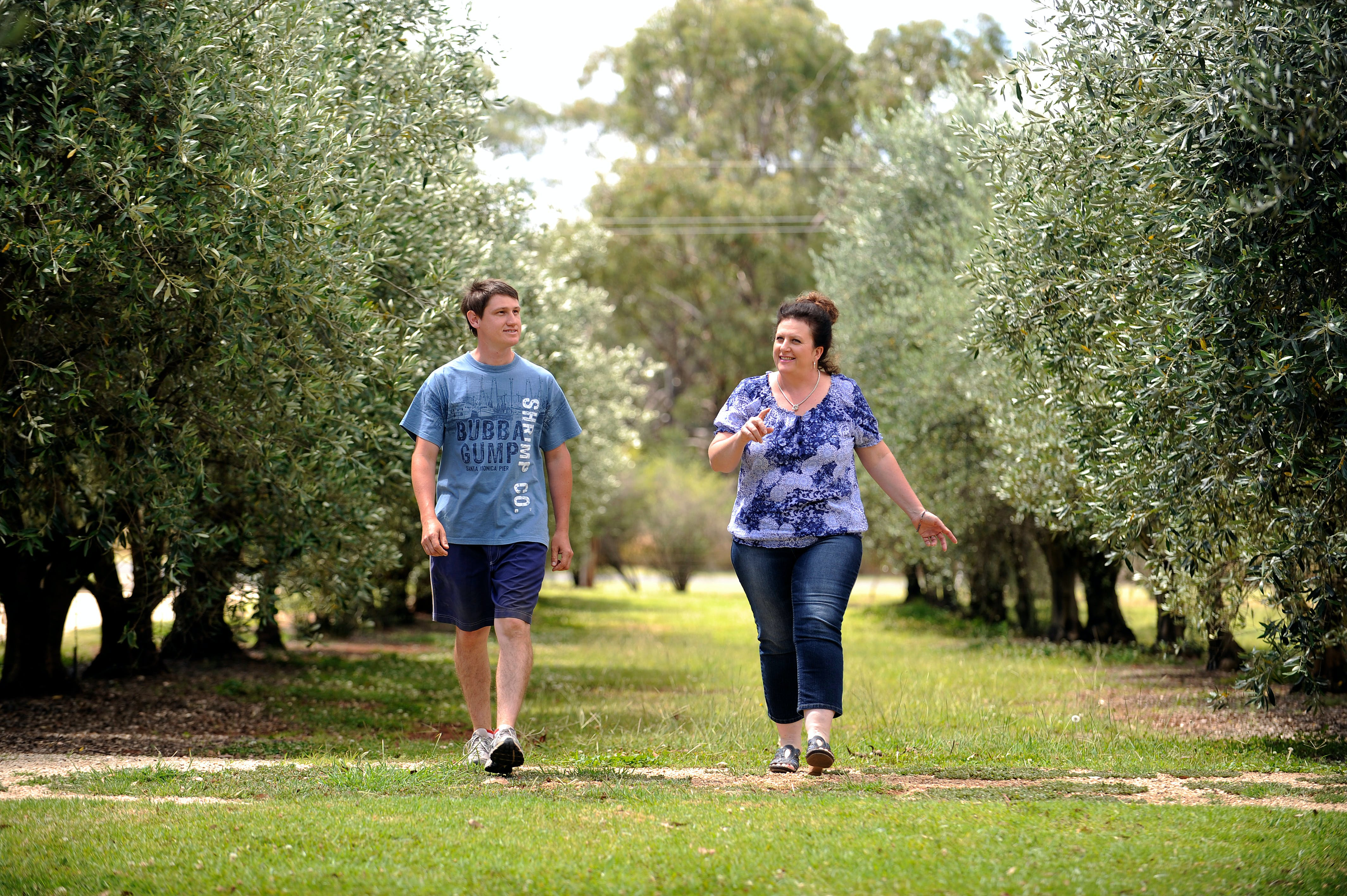 Olives of Beaulieu - Accommodation Bookings