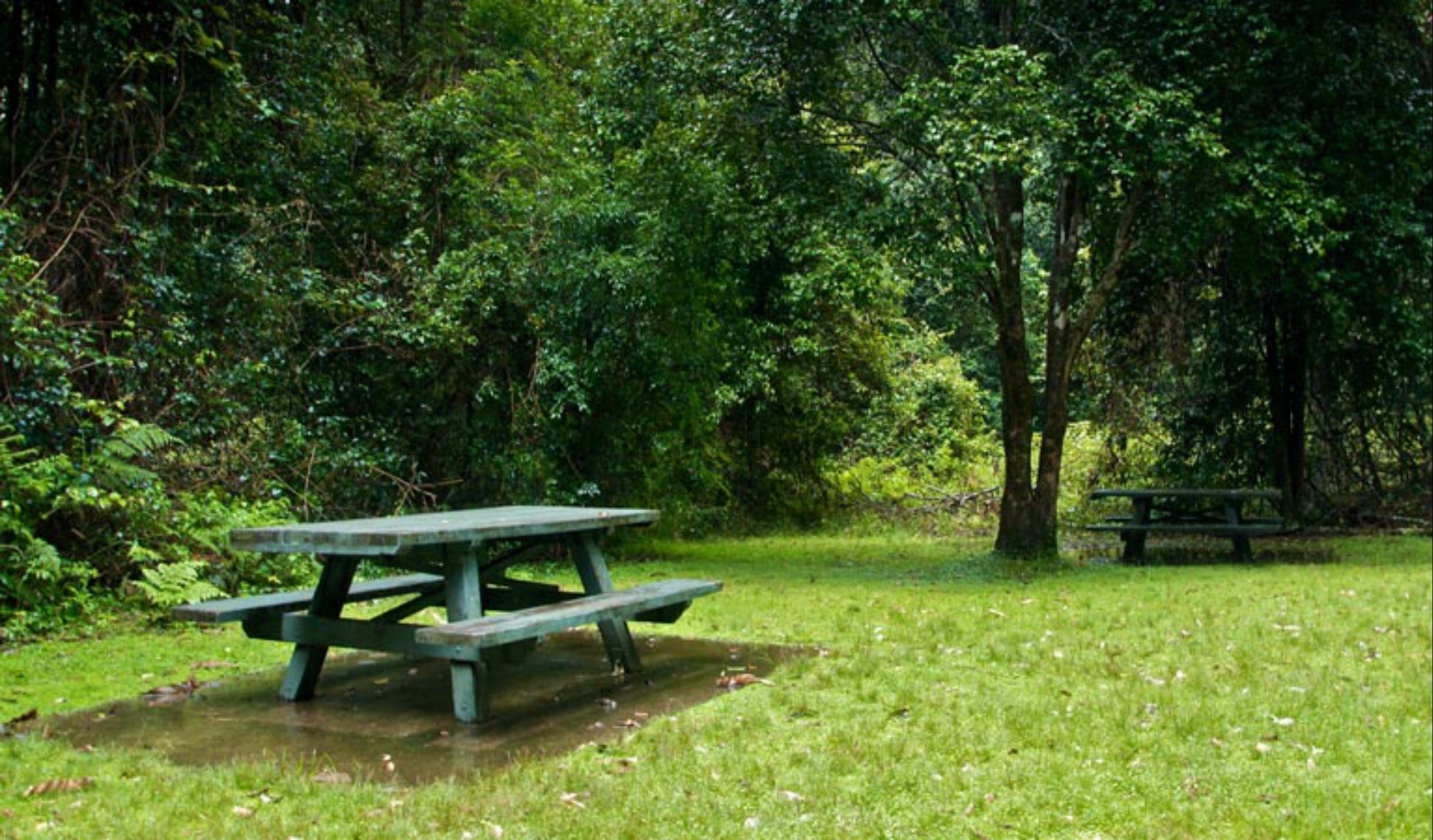 Williams River picnic area - Accommodation Bookings