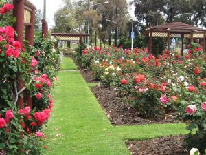 Cowra Rose Garden - Accommodation Bookings