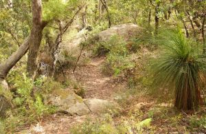 Mount Carnarvon Walking Track - Accommodation Bookings