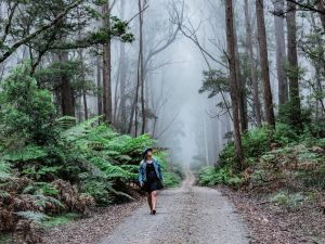The Corn Trail Walking Track - Accommodation Bookings