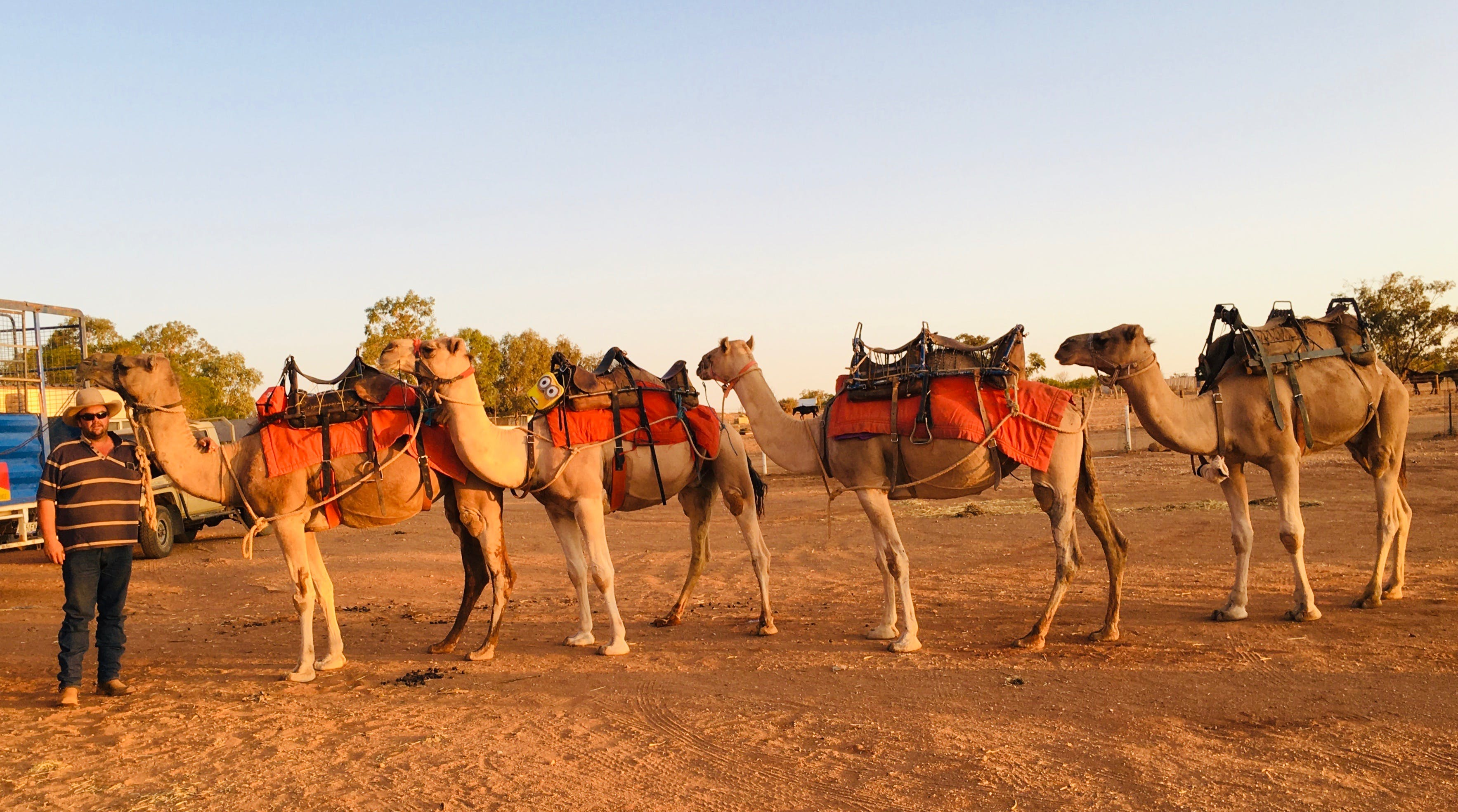 Broken Hill Camels - Accommodation Bookings